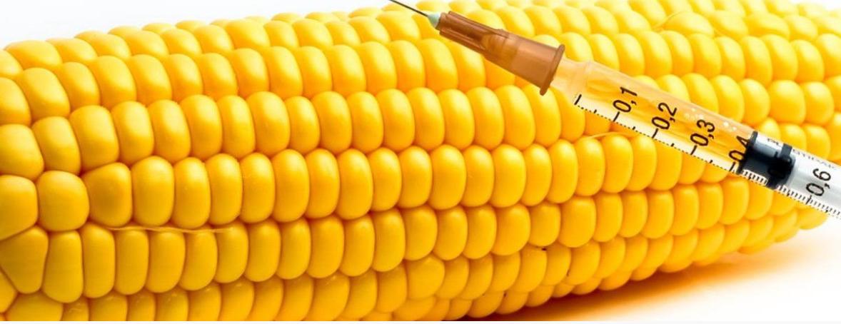 Генномодифицированные продукты. Как отличить от натуральных